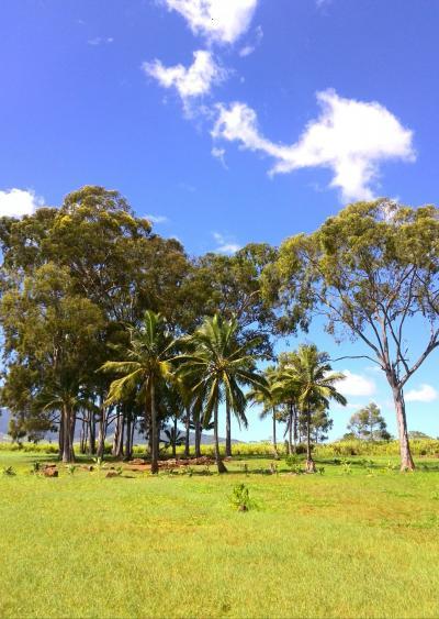 5度目のハワイ ヒルトン泊5日間 ベタな観光&グルメ旅
