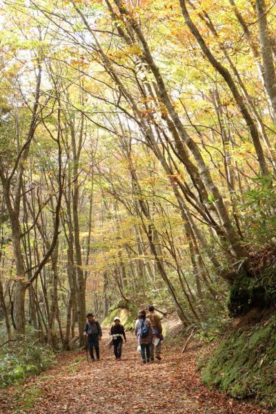 岡山県立森林公園 ~紅葉まっさかり マユミもまっさかり。すっかりリフレッシュのトレッキング!