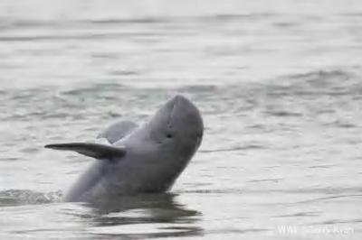 イルカを守ろう