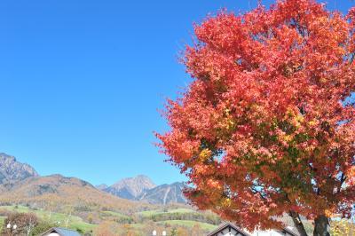 八ヶ岳南麓紅葉ドライブ