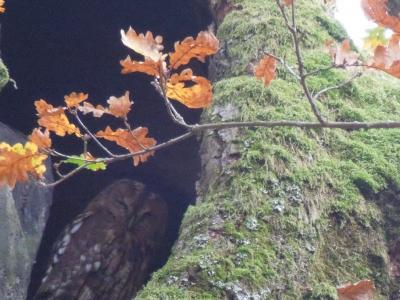 黄金の秋を楽しみにポーランド北東部へ ②ビャウォヴィエジャの森