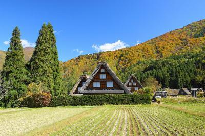 秋色を探しに白川郷に出かけました。