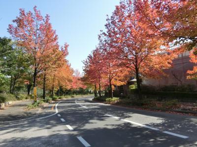 飯能市美杉台に紅葉を見に行きました