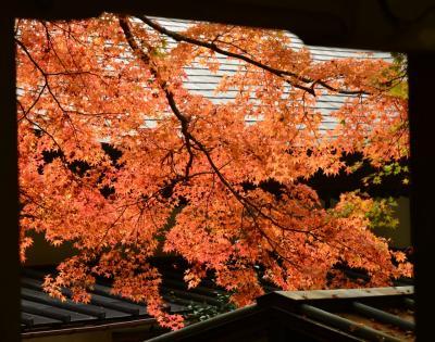 箱根の紅葉情報 仙石原長安寺の紅葉は もう少しで見頃 箱根湿生花園の紅葉は 見頃です 2014年11月2日