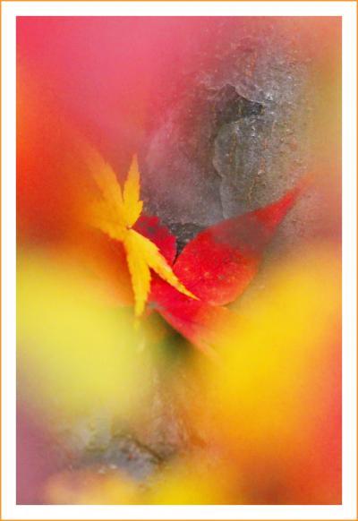 Solitary Journey [1469] 秋色に彩られた西中国山地は紅く染まったモミジでいっぱいでした!<もみの木森林公園> 広島県廿日市市