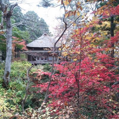 函館公園と香雪園の紅葉を見に♪