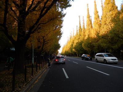 東京2013紅葉 【1】神宮外苑