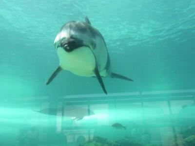 珠洲ビーチホテルのプライベートビーチ&のとじま水族館