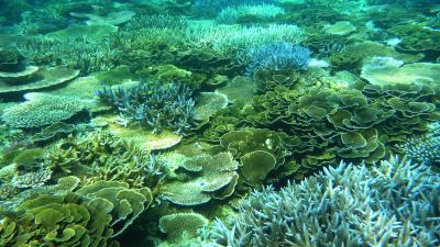 宮古島はシュノーケリングパラダイス!!イムギャー・大神島のサンゴ礁は激美!! 宮古島の最南シギラリゾート内ホテルブリーズベイマリーナ泊