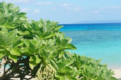 2014沖縄八重山ひとり旅vol.2(南のかなた波照間島)