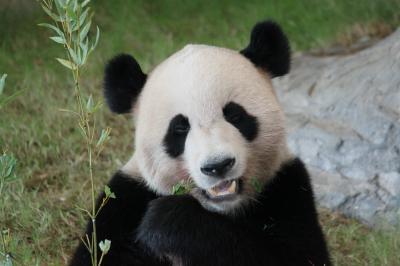 パンダに会いに、紀伊半島ぐるりドライブ旅 一日目①