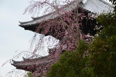 興福寺と平城京跡を訪ねる