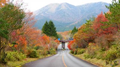 急に思い立って行った、熊本・大分 レンタカーでドライブ&観光と紅葉狩り1泊2日の旅【紅葉見頃の《久住高原ロードパーク》復路ドライブ編】(2014年11月)