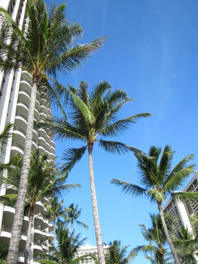 4歳児と行くハワイ旅行 Vol2:2~3日目