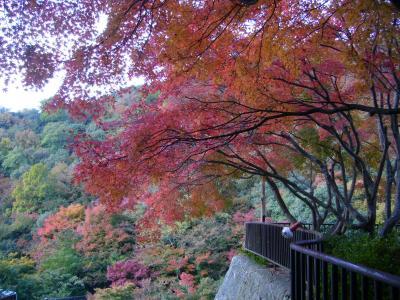 山が燃える~♪小豆島・寒霞渓の紅葉
