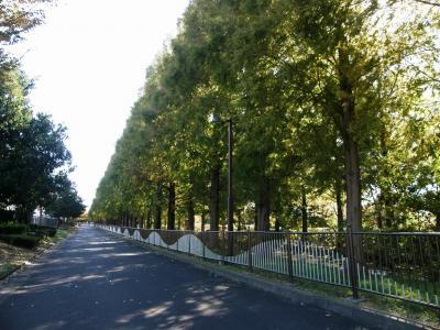 メタセコイヤの紅葉を求めて加須市はなさき公園まで歩くが・・・