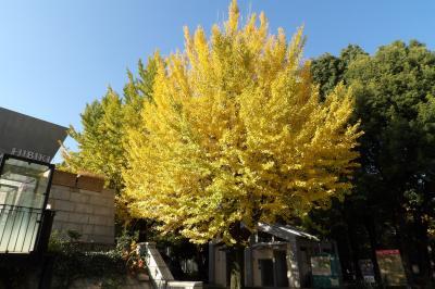 上野公園の秋景色