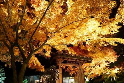 栗林公園2014秋のライトアップ初日