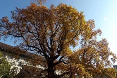 東博の秋景色