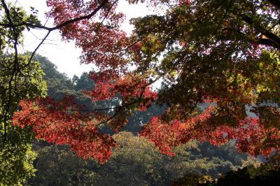 トーハクの庭園で秋を満喫