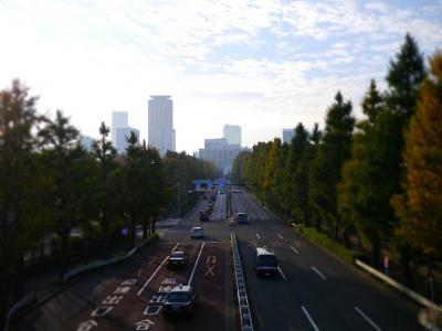 早朝散歩@神宮外苑いちょう並木