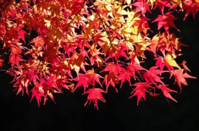 紅葉と日本人のこころ・・・明日香から談山神社を歩く