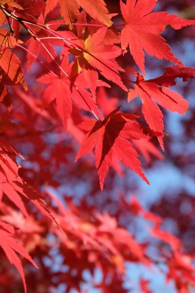 紅葉を楽しみながらレトロな龍野をぶらり♪