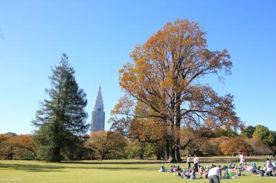 秋色が深まる新宿御苑と神宮外苑+丸の内X'masイルミネーション