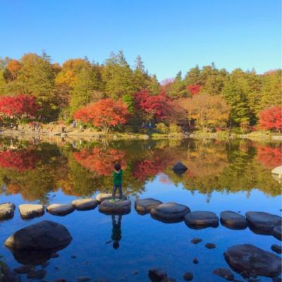 東京は紅葉シーズン 今が見頃 | 国営昭和記念公園 | 東京 | 散策 |2014-11