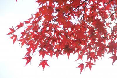 20141123-3 駒込 旧古河庭園の紅葉とバラ園と