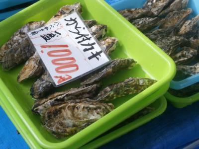 フライング まだ少し早かった瀬戸内の牡蠣