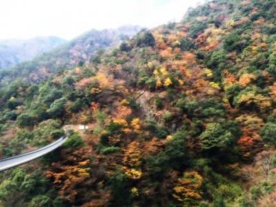 九州の旅(最後) 五家荘平家の里と吊り橋二つ(11月20日)