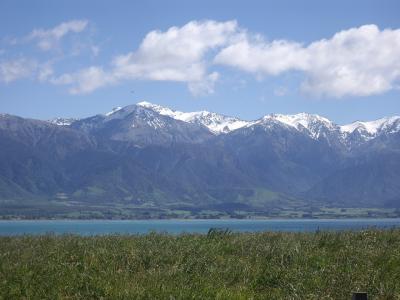 NZ南島ワイナリー巡り旅行記1、カイコウラ、2014.11
