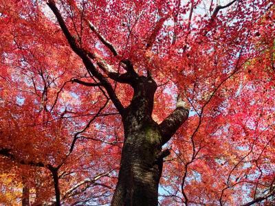 たまには家族みんなでお出かけ~♪京都~大原三千院~♪