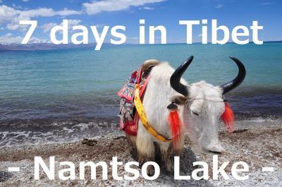 7 days in Tibet22★ナムツォ湖★天の湖とヤク!