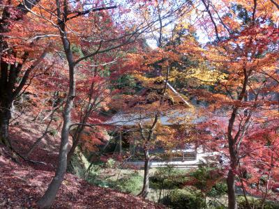 奥琵琶湖の紅葉を満喫して