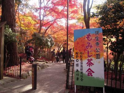 瑞宝寺公園のもみじ茶会 ~秀吉が愛した金泉に浸って~