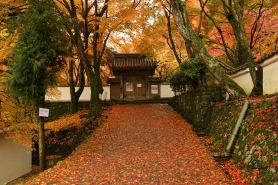旅するイルカ♪ 紅葉狩り 大阪府 岸和田 大威徳寺へ