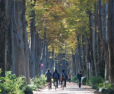 ちょっぴり散歩「武蔵野の欅並木」(東京)