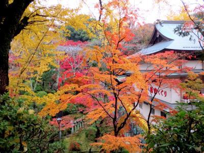 信貴生駒スカイラインから信貴山へ 小雨でも綺麗な紅葉鑑賞