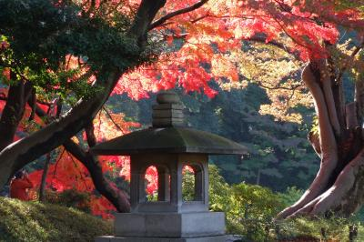 2014晩秋の小石川後楽園