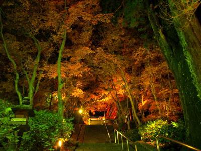 談山神社の紅葉ライトアップへ(*^o^*)