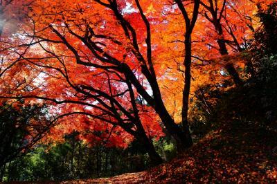 用作(ゆうじゃく)公園の紅葉2014