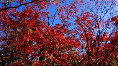 昨日のリベンジ、箱根美術館の紅葉は見頃でした。 上巻