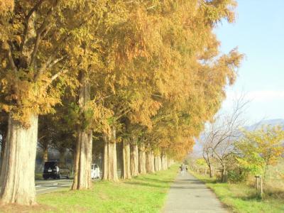 鶏足寺・近江孤篷庵の紅葉を求めて