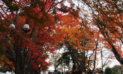 紅葉の名所もみじのトンネルを歩く(旧西那須野の大山元帥墓所と大山公園の紅葉を愛でる休日+乃木神社静沼の鴨と遊ぶ)