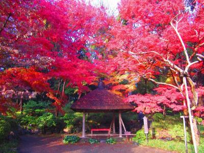 都内の紅葉名所を散歩     2014.11.29 〈後編〉