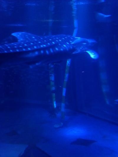 ジンベイザメ、イルカショーが印象に残りました
