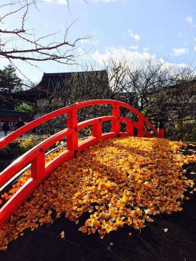 京都の紅葉 見納めツアー