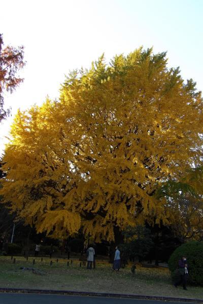 東博の秋景色(2)